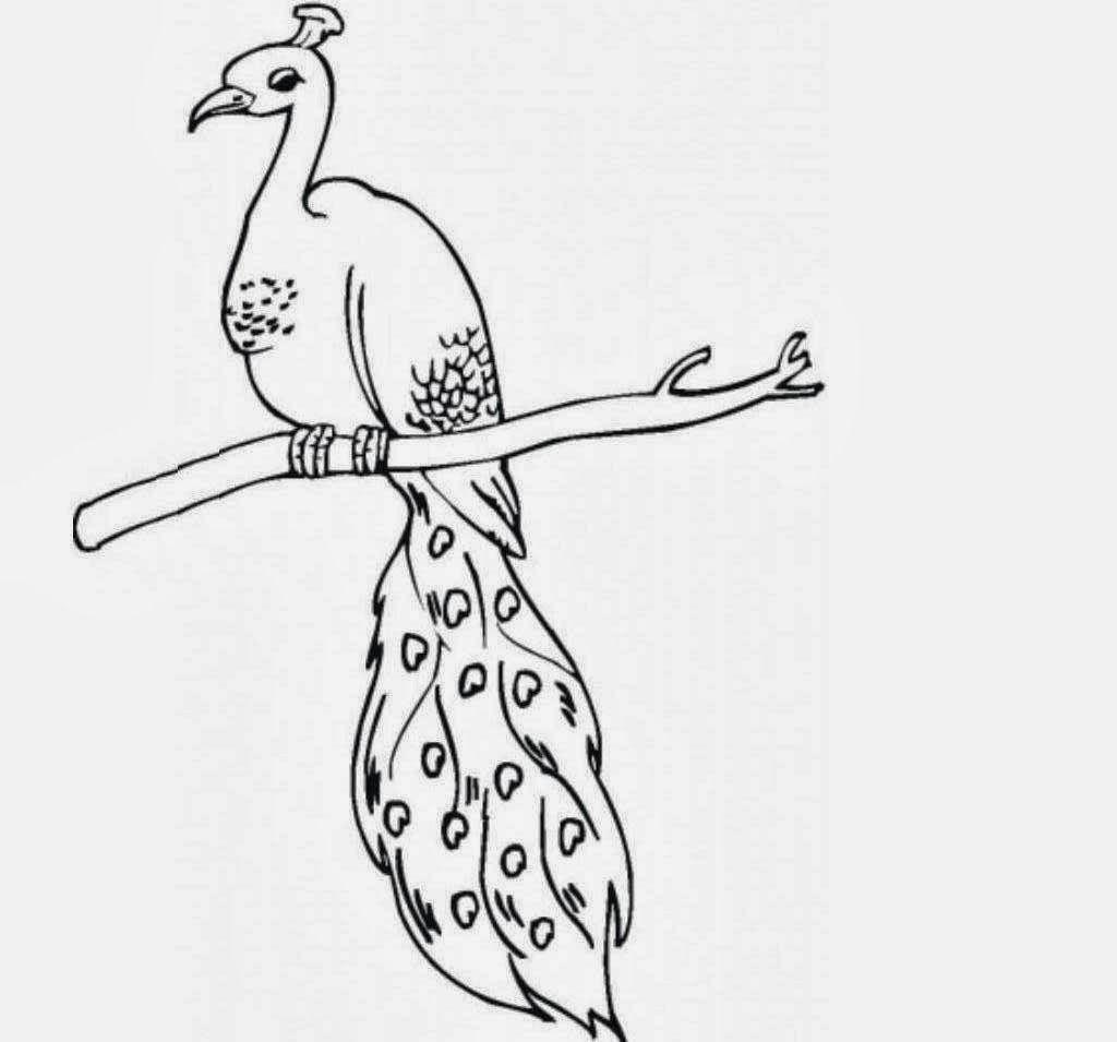 Image result for peacock sketch   designs/measurements   Pinterest