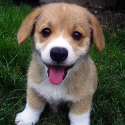 Durch Charity for Dogs erhalten Sie qualitatives Premium