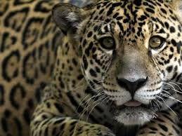 animales en peligro de extincion - Buscar con Google