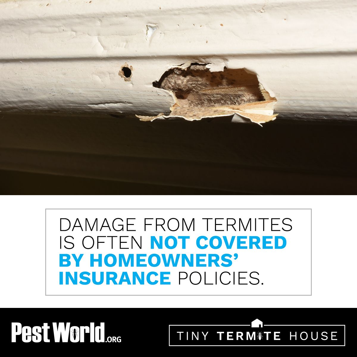 Did you know that damage from termites is often not