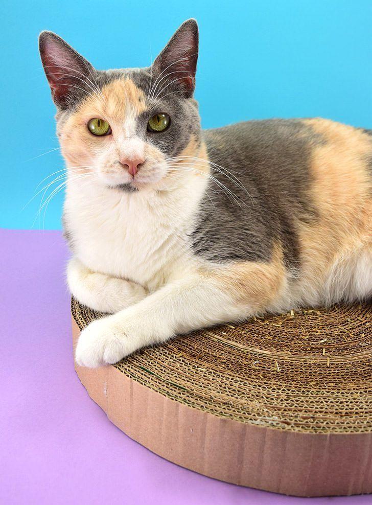 Diy cardboard cat scratcher cat scratcher cardboard cat