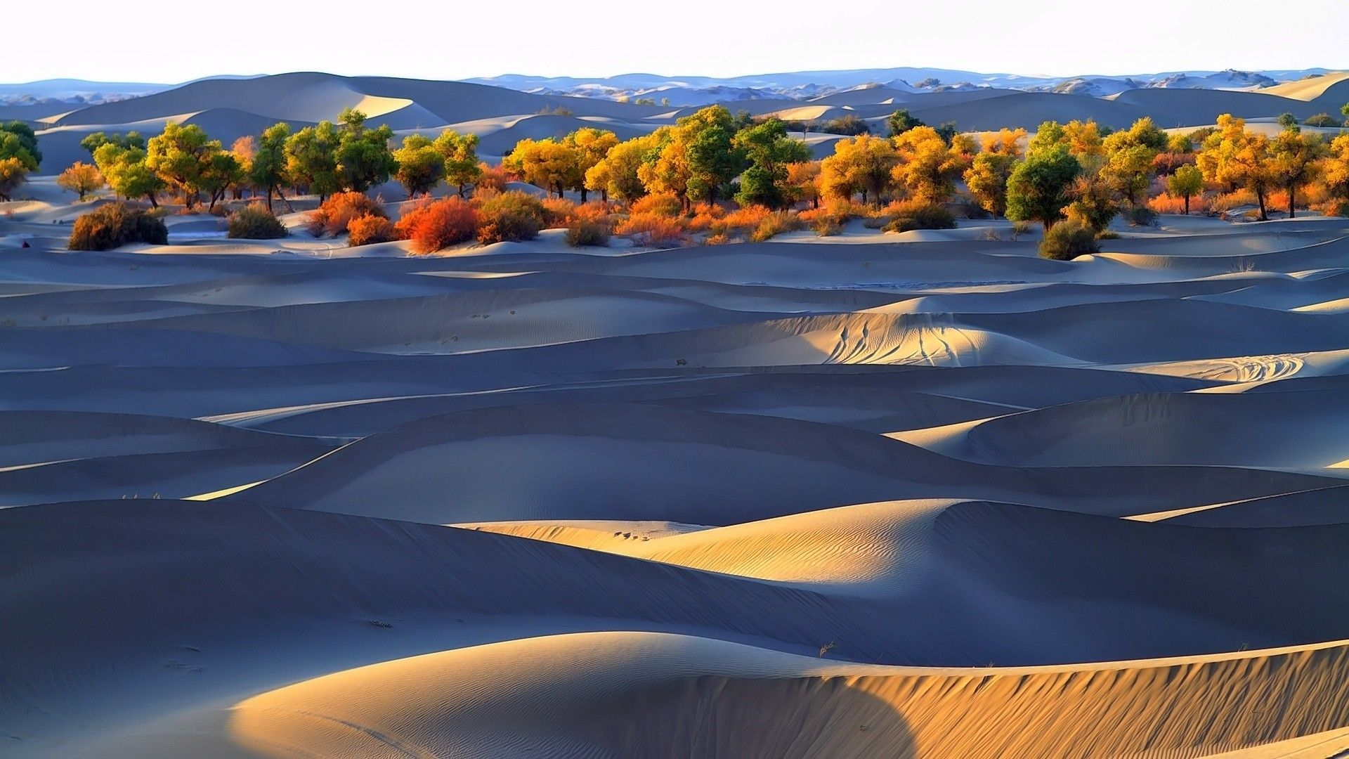 Autumn Trees In The Desert Hd Desert Wallpaper Nature Wallpapers Download Beautiful Hd Wallpaper 1080p 2160p Uhd 4k Hd Wallpaper Landscape Nature Wallpaper