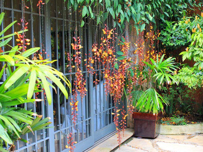 Galeria - Minhas Plantas