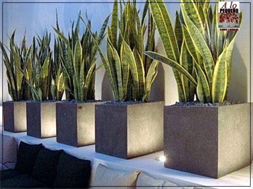 Maceteros grandes buscar con google ideas para patio - Macetas para interiores ...