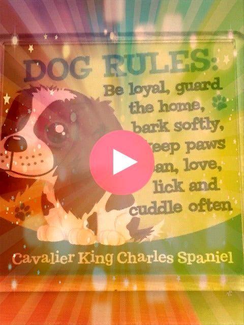 out what Im selling on Mercari Fridge Magnet Cavalier King CharlesCheck out what Im selling on Mercari Fridge Magnet Cavalier King Charles Cavalier King Charles Spaniel M...