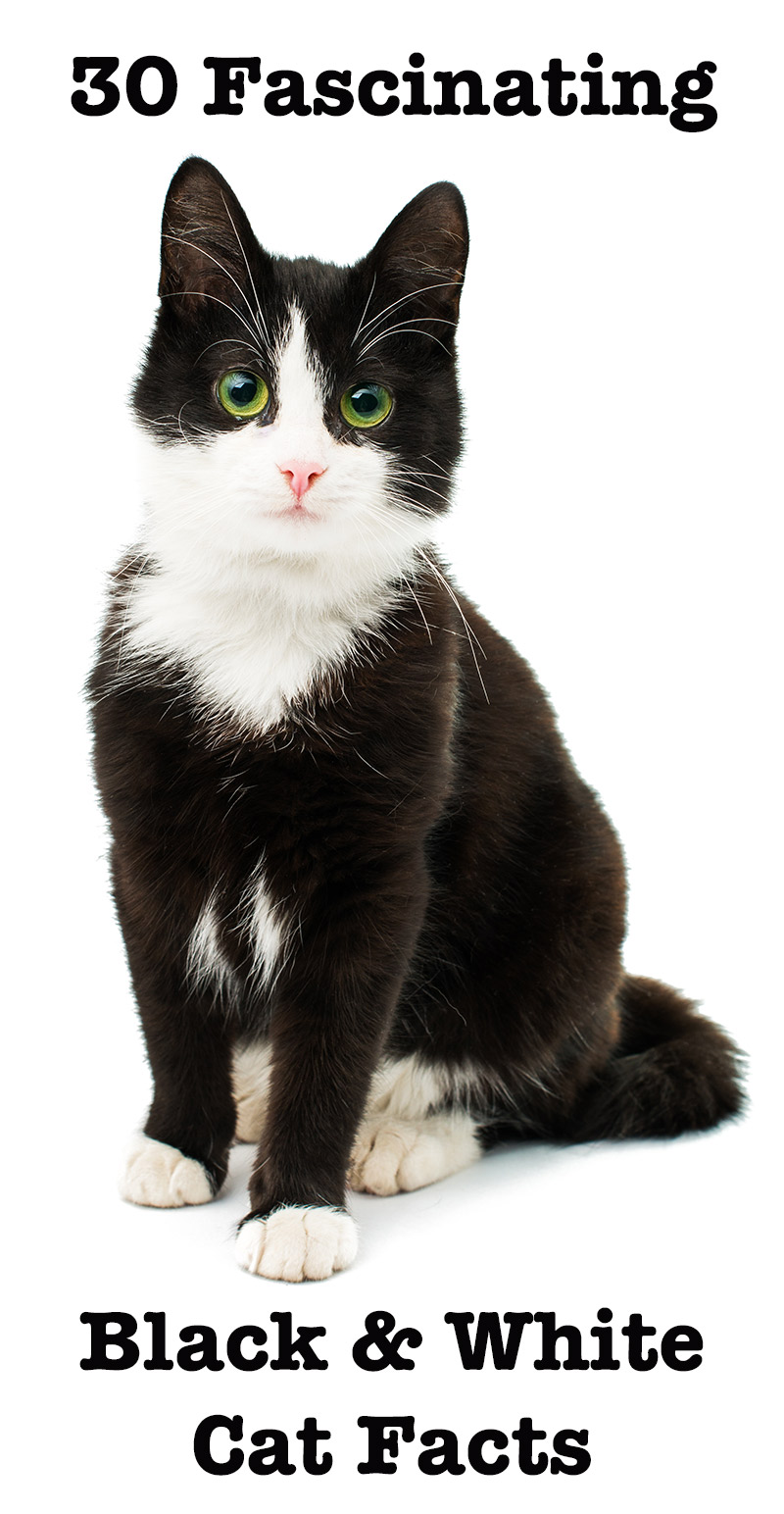 black and white cat Google Search in 2020 Cat facts