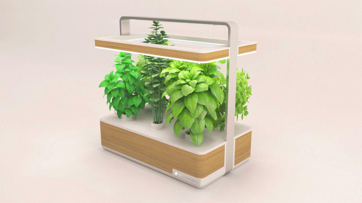 Jardin Aromatique Intérieur la startup culteev a mis sur pied un nouveau dispositif innovant
