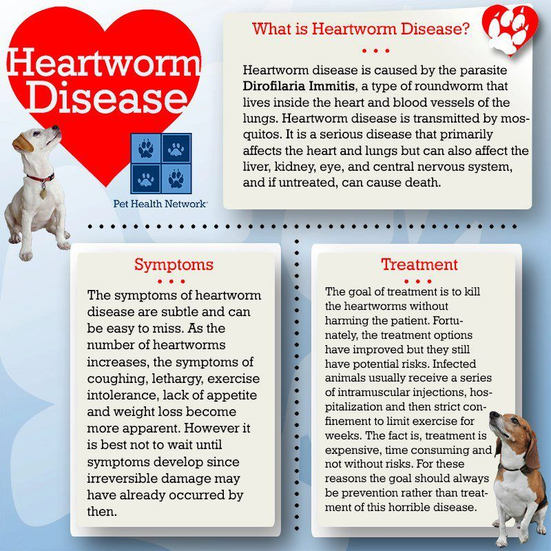 April is National Heartworm Awareness month and a great