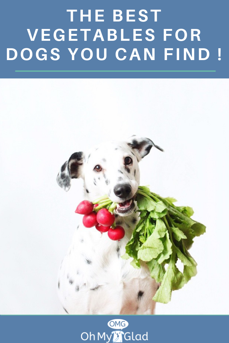 The Best Vegetables For Dogs You Can Find ! Can dogs eat