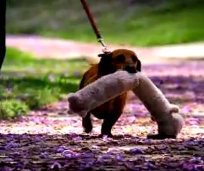 Petsmart Commercial Bobo Petsmart Weenie Dogs Wiener Dog