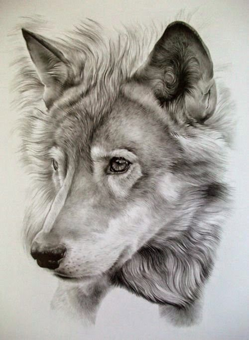 Pencil Sketches Of Animals