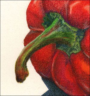 colored pencil pepper