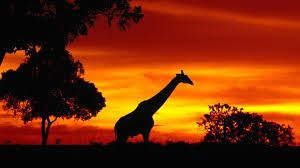 africa wildlife - Google Search