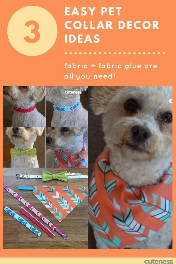 3 Truly Easy Ways To Jazz Up A Pet Collar Puppy Diy Easy Pets