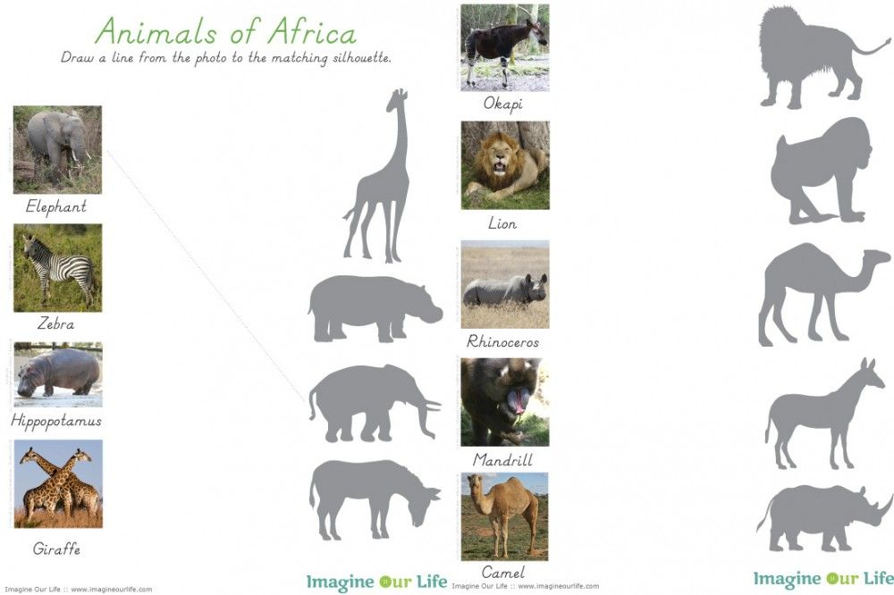 Animals Of Africa For The Montessori Wall Map Quietbook With Printables Animales De Africa Libro De Animales Animales