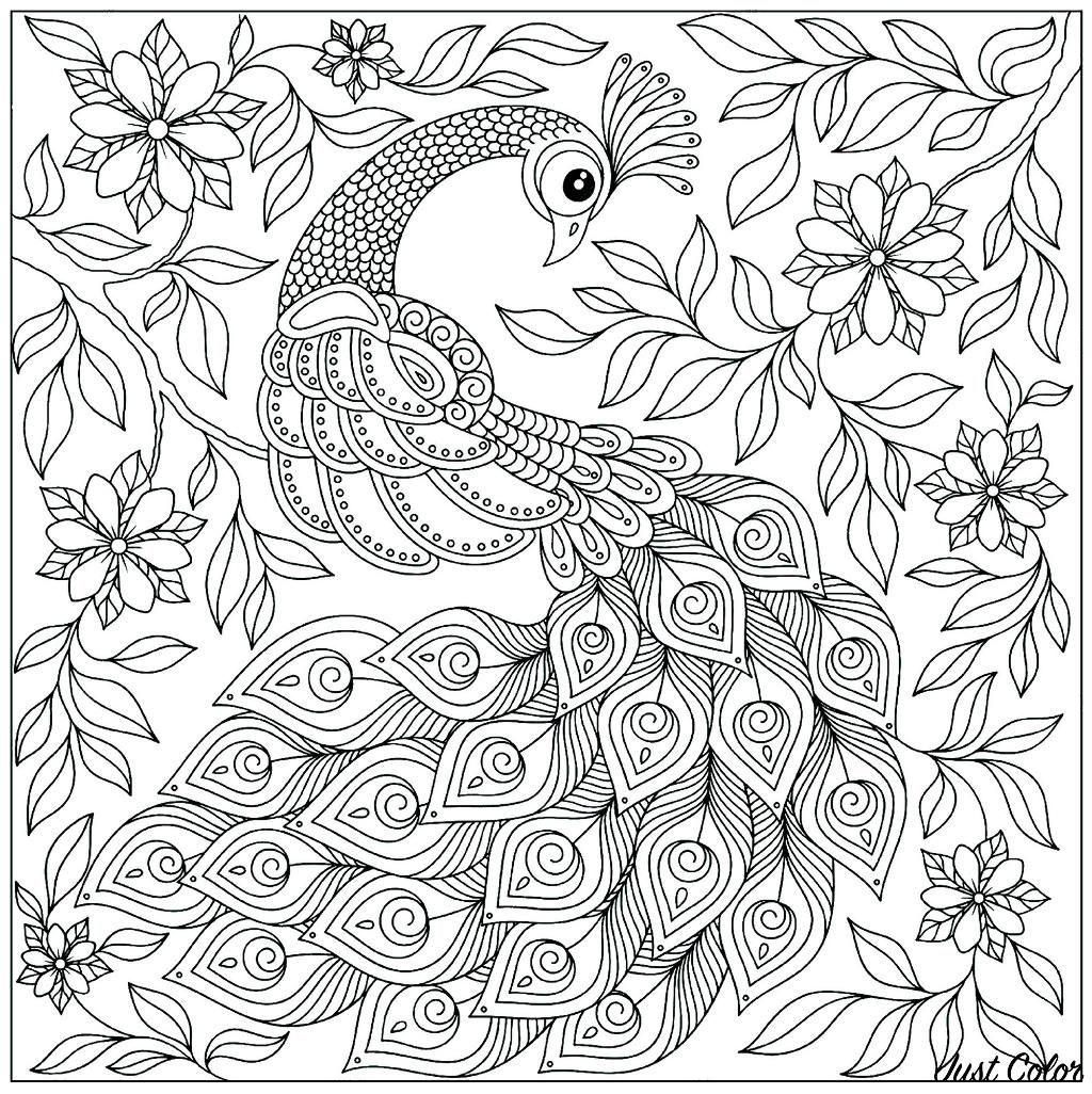 16 Coloring Page Peacock Peacock Coloring Pages Bird Coloring Pages Coloring Pages