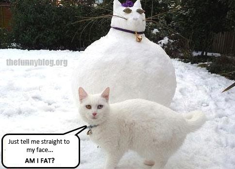 Funny Memes For Snow : Animal memes funny cat snow cat meme cat pictures great