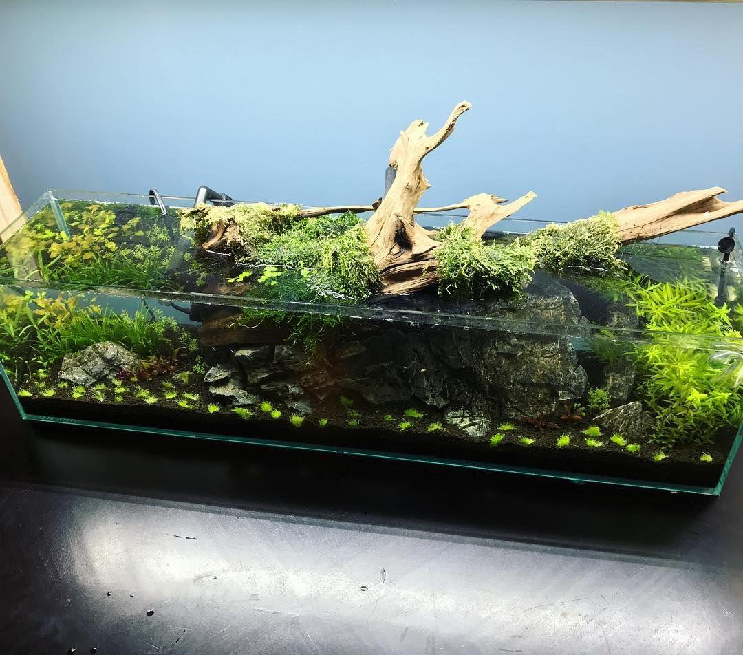 Beautiful Aquascape Nature Aquarium Fish Tank