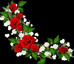 سكرابز ورد روعة 2020 سكرابز ورد للفوتوشوب بدون تحميل سكرابز ورد Png Rose Clipart Flower Frame Png Flower Border Png