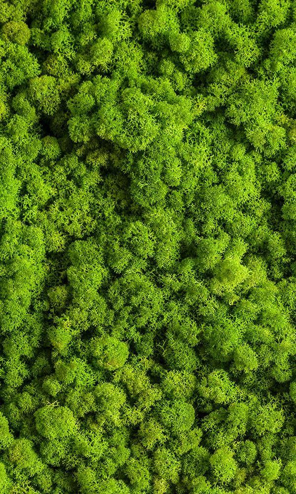 Bubbly Moss Digital Wallpaper M9580