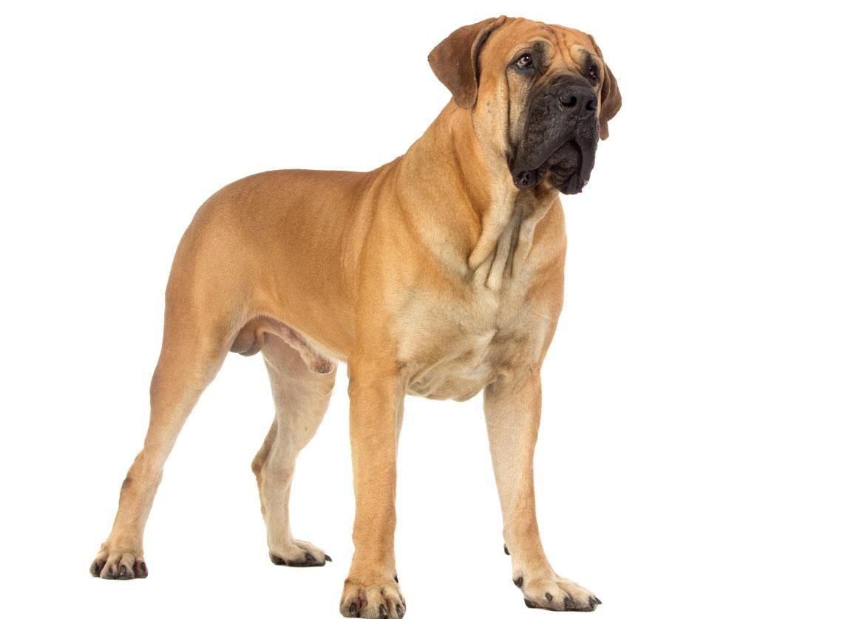 Pin On Dog Life