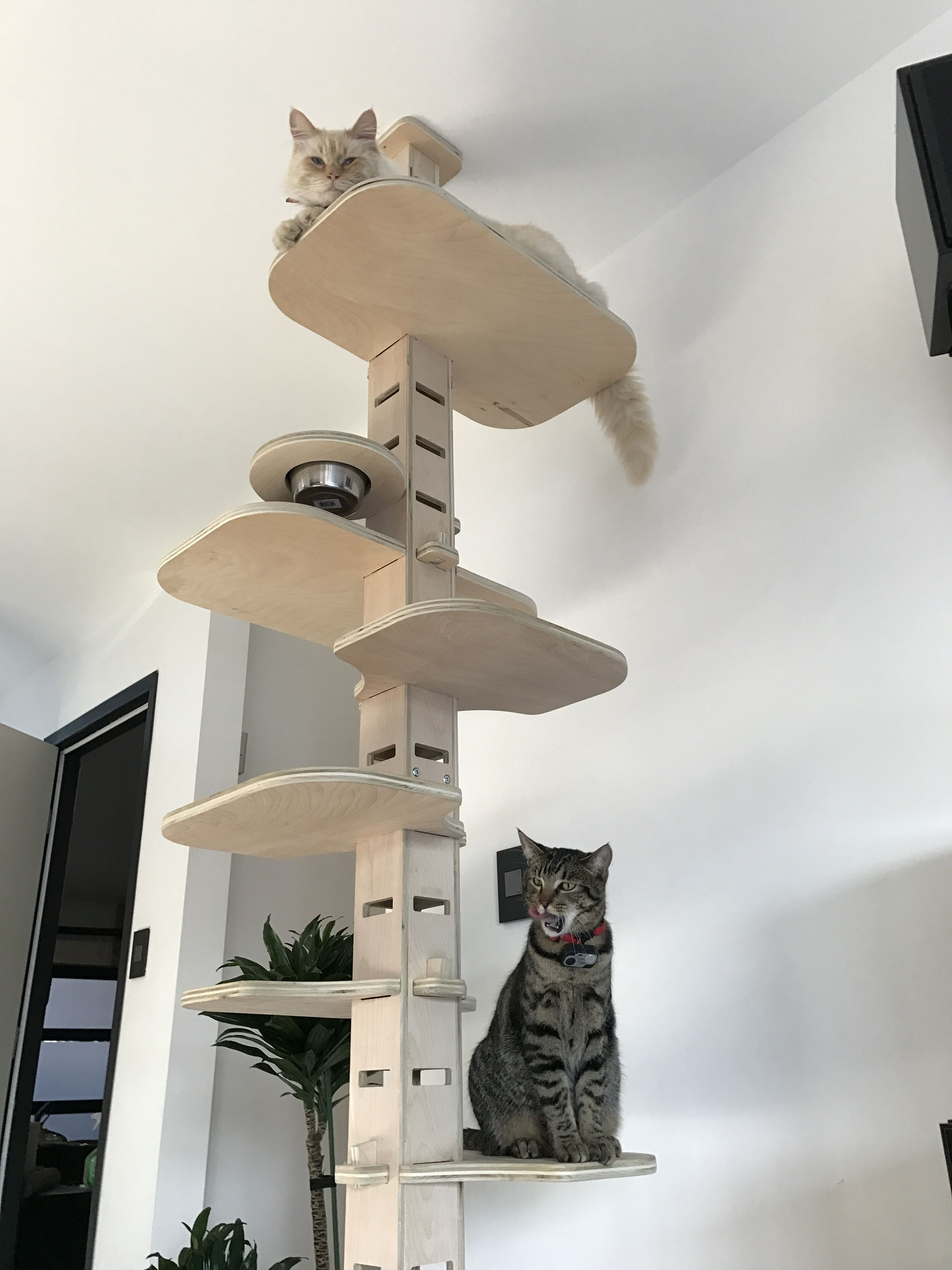 Pin On Contempocat Modern Cat Furniture
