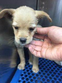 1 Day Left 6 10 17 Why Spend The Money To Have Your Dog Spayed When You Can Kill Her Puppies For Free In El Paso Texas A Great With Images Dog Adoption Dog