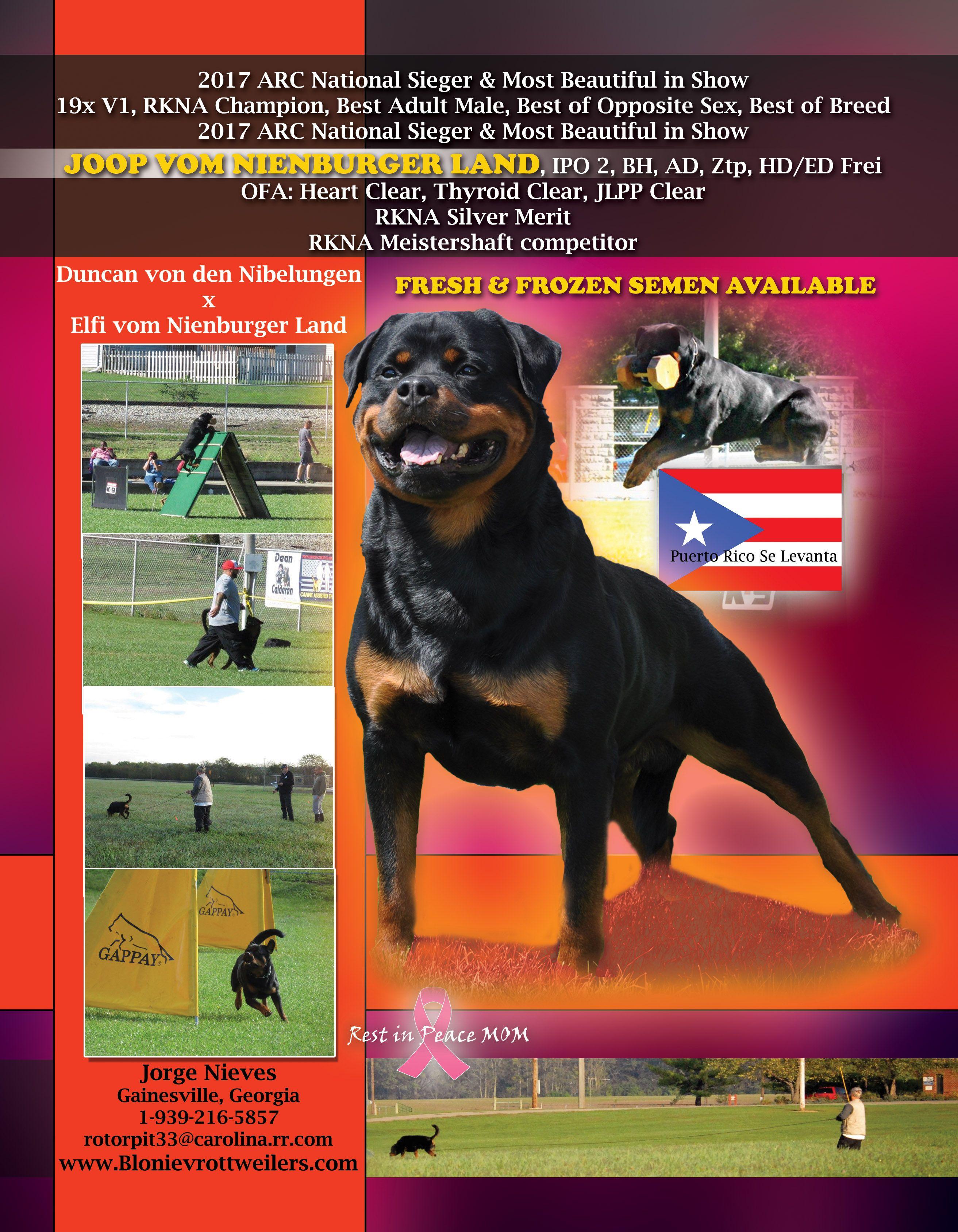 Pin On Rottweiler Love