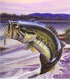 Bass Images Of Fish Largemouth Bass Fishing Wallpaper Background Bass Fishing Pictures Fish Artwork Watercolor Fish
