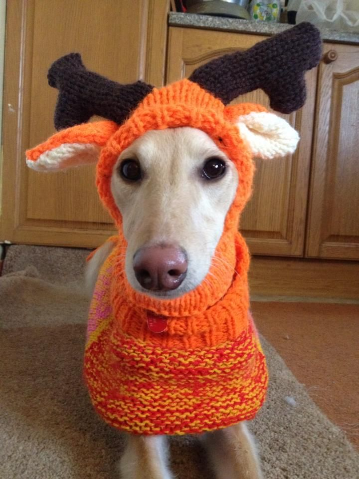 Whippet Reindeer Hat knitting pattern I dont have a dog, but this made m...