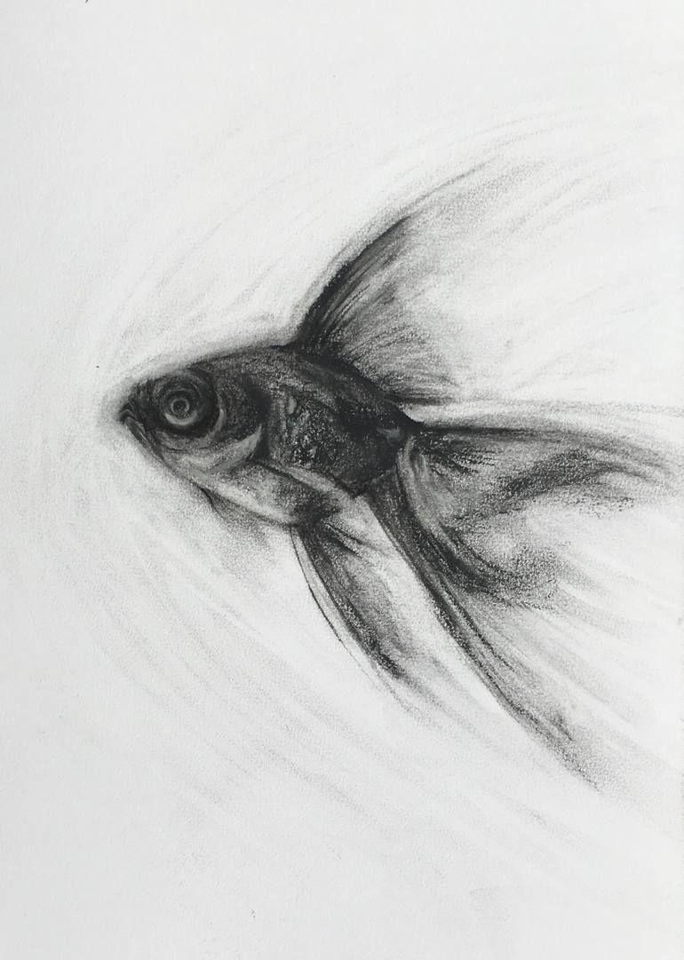 Original Fish Drawing by Flo Lee | Fine Art Art on Paper | Charcoal Black Moor