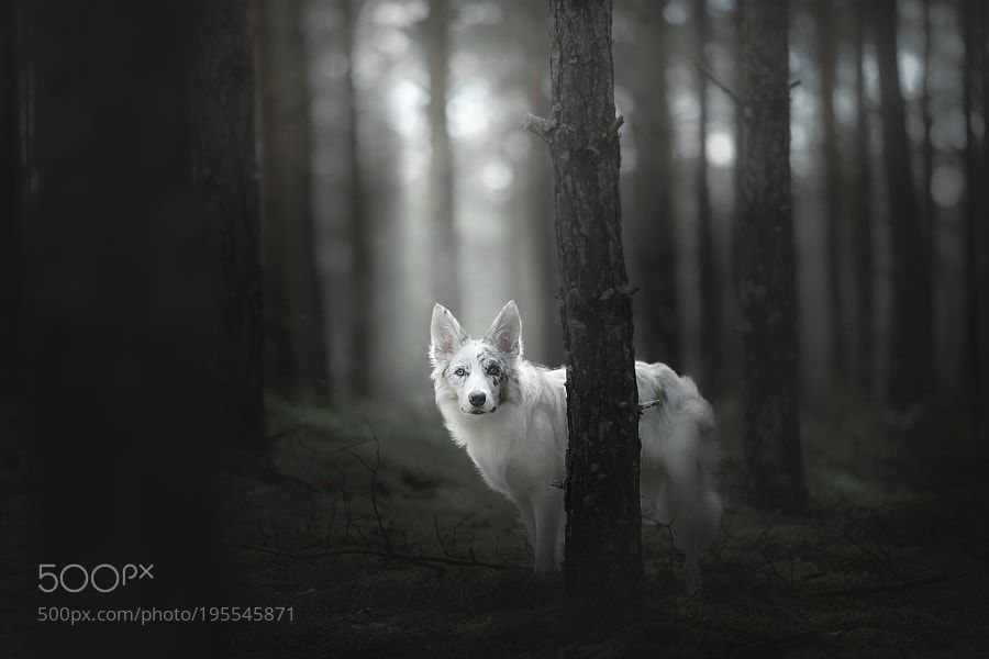 Wake The White Wolf by alicjazmyslowska
