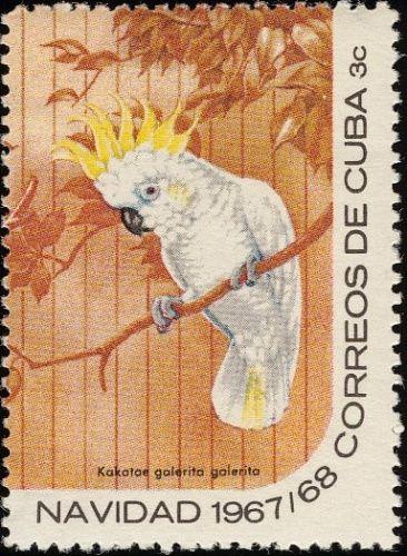 Sulphur-crested Cockatoo - Cuba