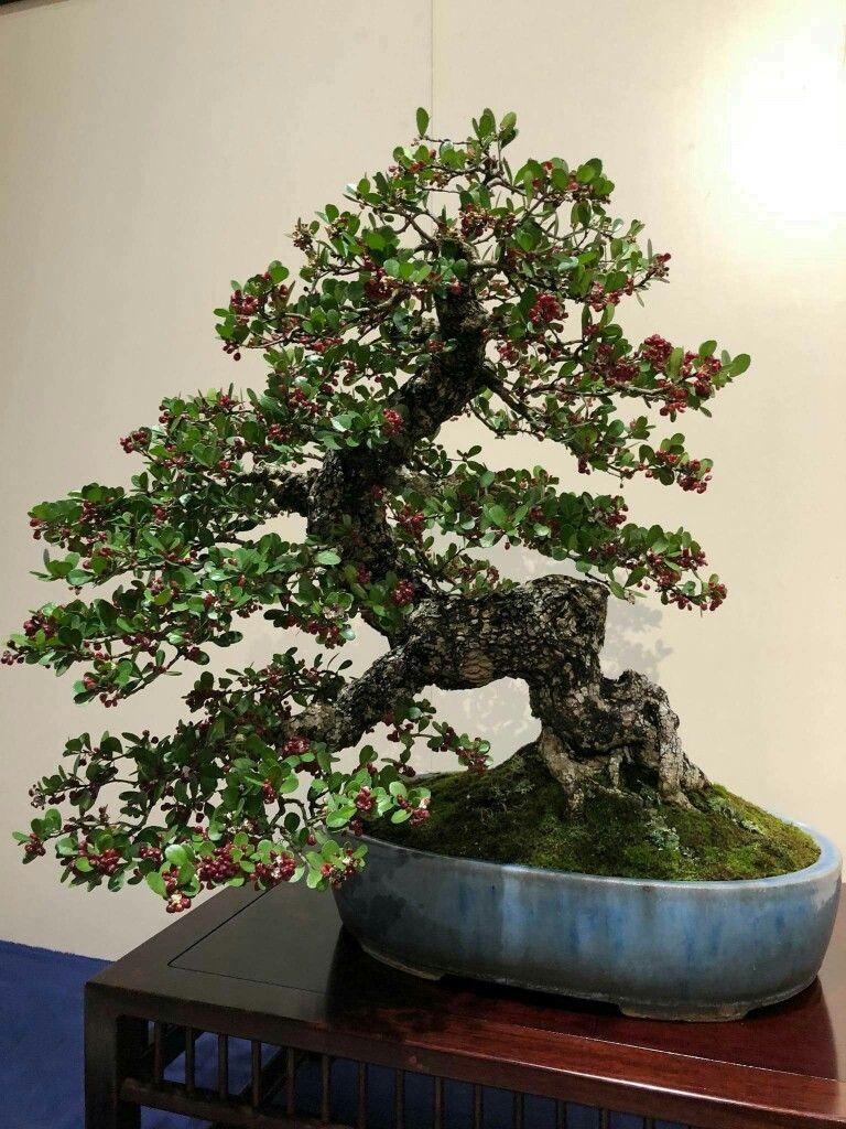 knstlicher bonsai fabulous bonsai takeru xcm podocarpus pf knstlicher baum with knstlicher. Black Bedroom Furniture Sets. Home Design Ideas