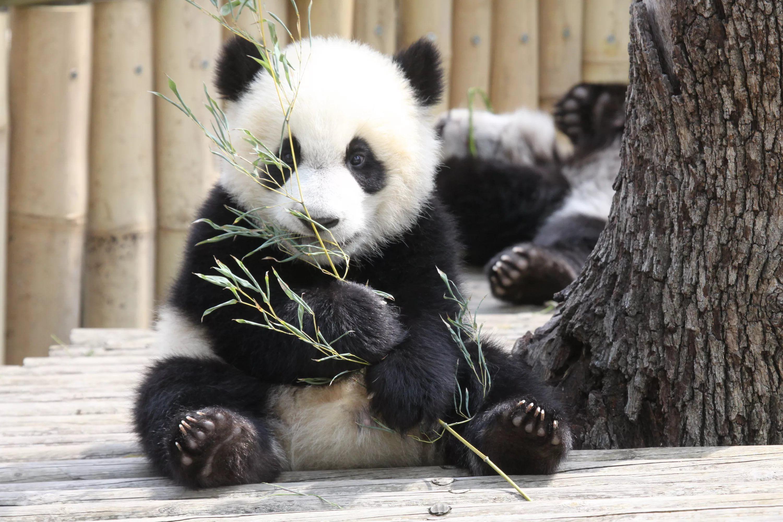 фото с пандами милые оленей имеются
