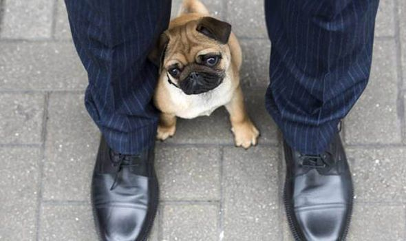 Find A Gorgeous Kingsmen Model Holding A Pug In London This