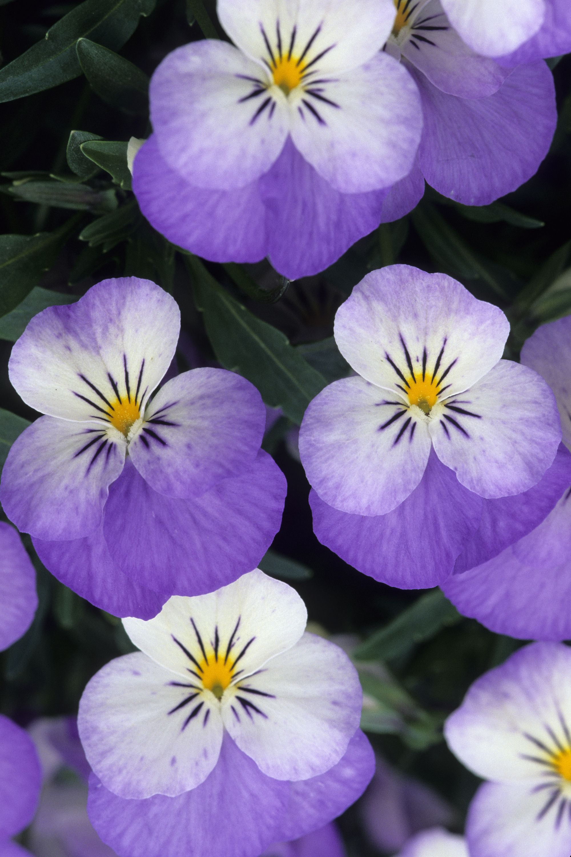 20 Flowers You Should Have In Your Fall Garden Fall Plants Fall Flowers Winter Flowers