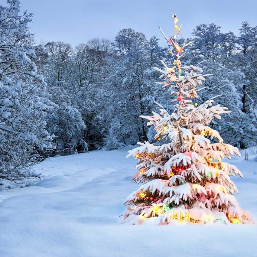 Outdoor Snow Christmas Tree Lights Backdrop - 842 Snowing