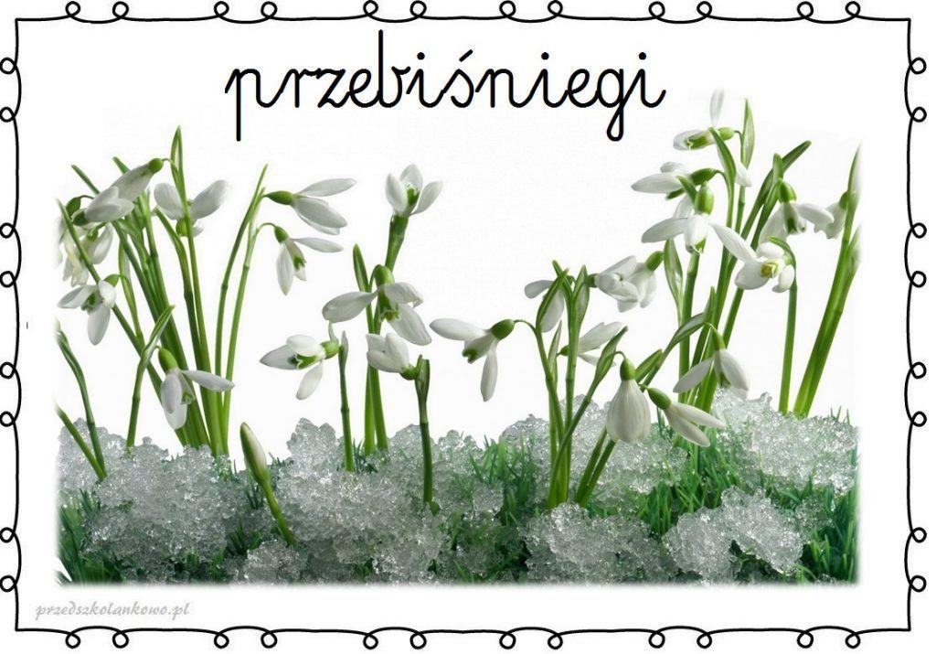 Wiosenne Kwiaty Plansze Zestaw 1 Przedszkolankowo Spring Activities Kids And Parenting Toddler Activities