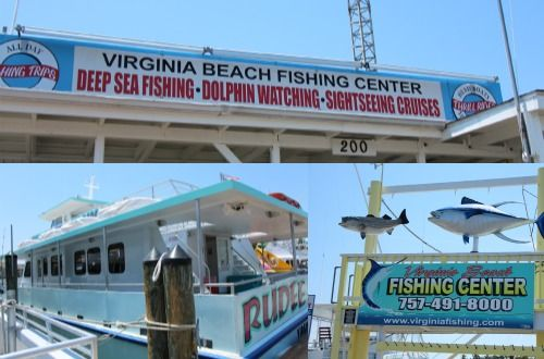 Heading To Virginia Beach Take The Dolphin Watching Trip Vabeach