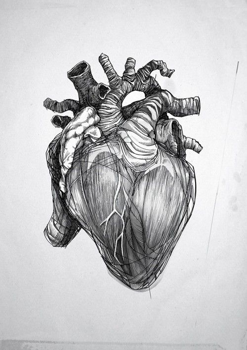 Anatomical heart sketch | Body Art | Pinterest | Heart sketch ...
