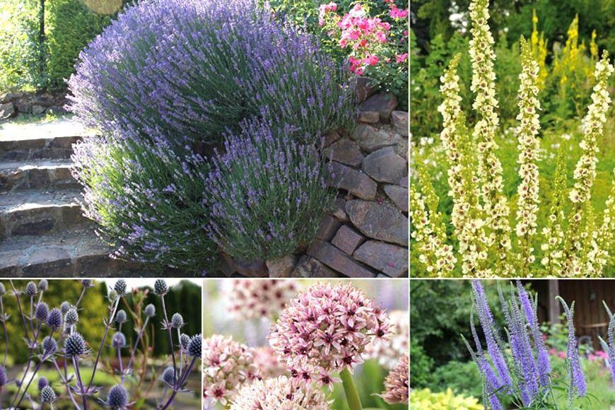 Pflanzen Die Sonne Und Trockenheit Vertragen Pflanzen Balkon Pflanzen Tom Garten