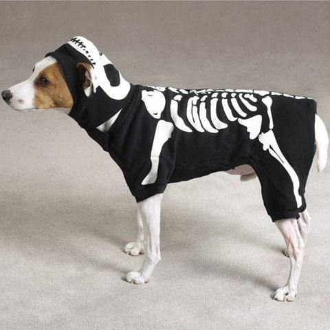 Wild Animal Funny dogs costumes animals zone Animals Pictures Funny