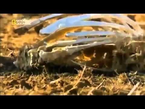 Cazadores De Ovnis Codigo Rojo Documental de History Channel en Espanol