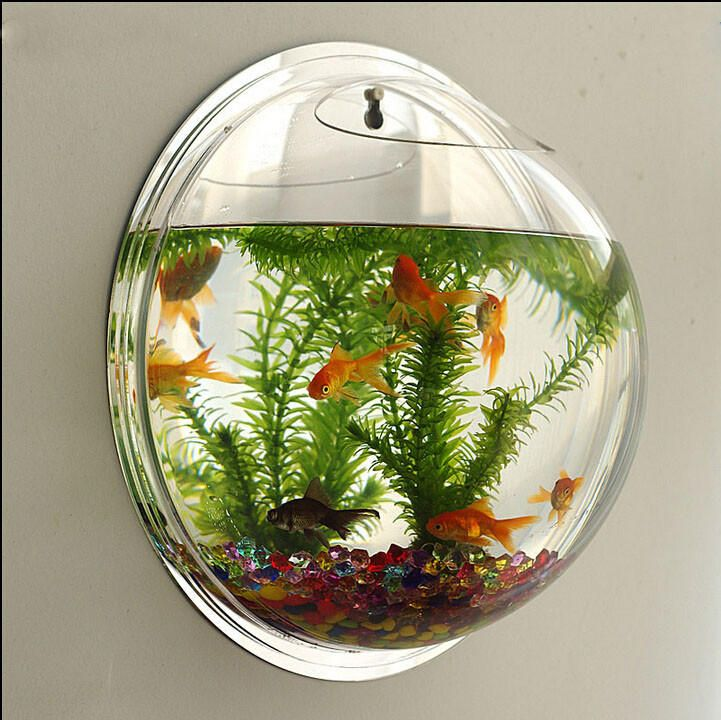 wall type mini aquarium fish bowl 2020 φυτά φυτά on wall types id=74872
