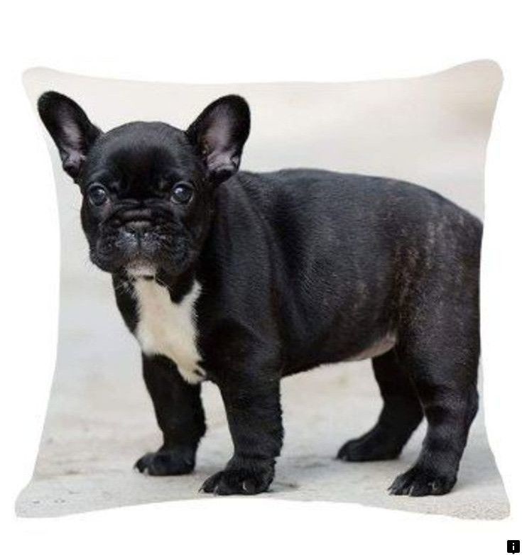 Discover More About Teacup Pugs For Sale Just Click On The Link