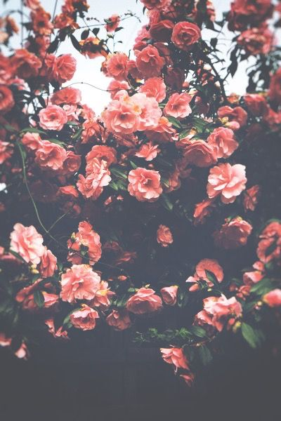 Beautiful Tumblr P H O T O G R A P H Y Pinterest Flowers