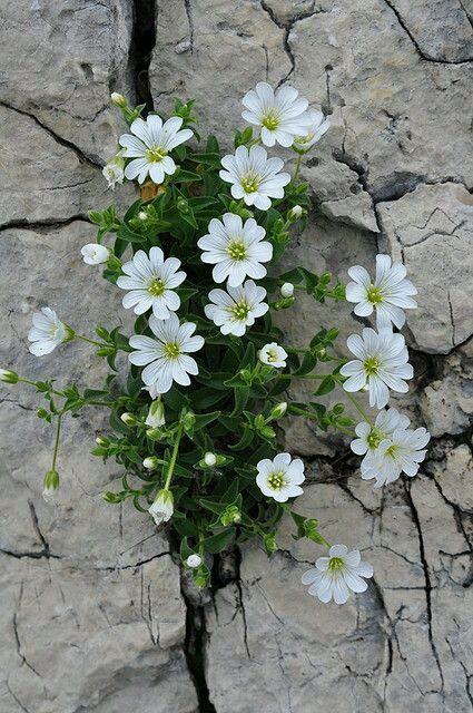 Nature finds their way #schöneblumen