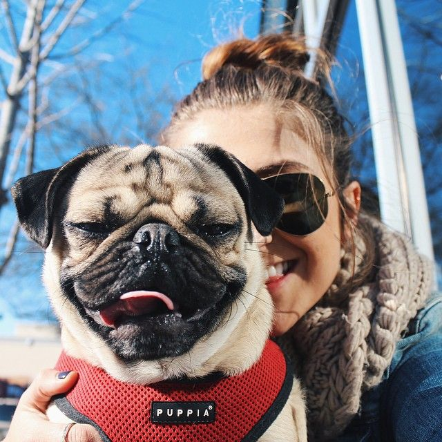 5 Things You Didn T Know About Doug The Pug Join The Pugs