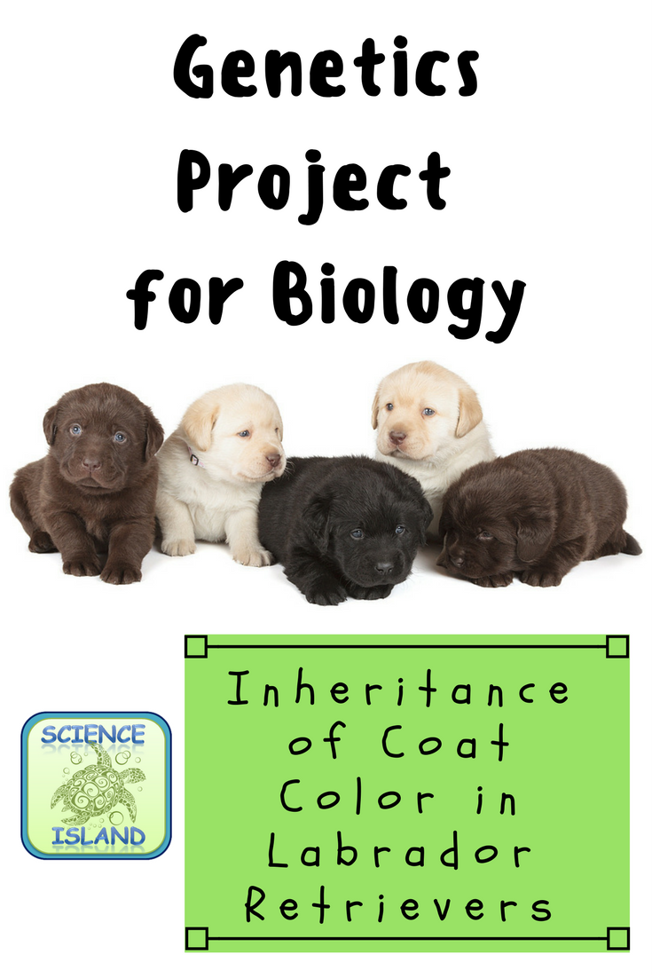 Project The Inheritance of Coat Color in